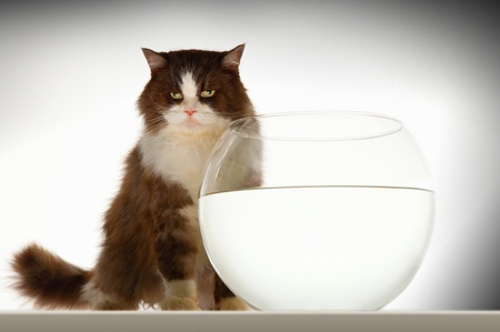 Cat sitting by empty fishbowl Stock Photo - 18897113