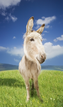 Donkey in Field