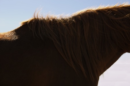 cropped off: Brown Horses Neck