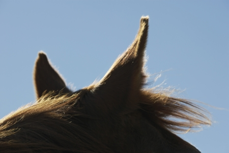 cropped off: Horses Ears