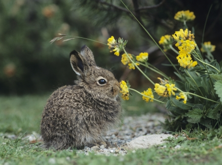 Young hare eating yellow clover Stock Photo - 18898047