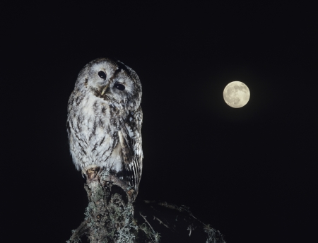 perching: Owl perching on tree