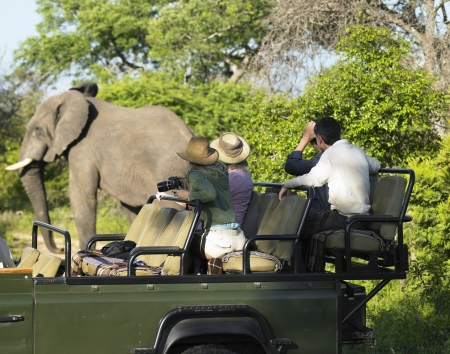 jeep: Group of tourists on safari watching elephant