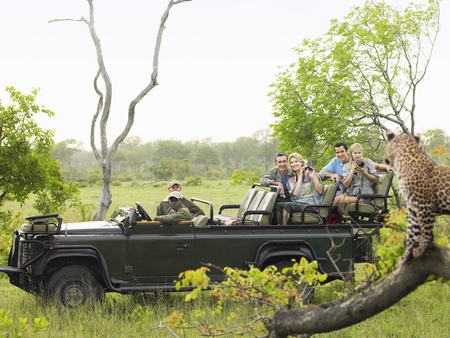 cheetah: Tourists in jeep looking at cheetah standing on log