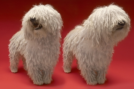 woolley: Two Komondor Dogs on red background LANG_EVOIMAGES