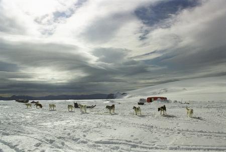 groupings: Cani da slitta in prossimit� di un isolato casa