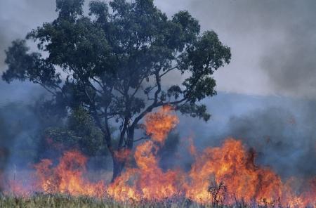 burning bush: Australia Bush fire