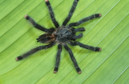 Black Spider on Leaf Stock Photo