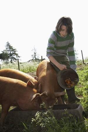 sty: Boy (7-9) feeding pigs in sty