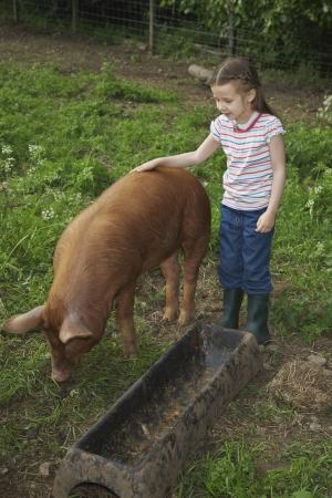 sty: Girl (5-6) stroking pig in sty