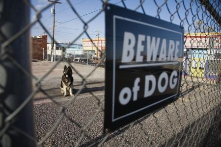 alsation: Guard dog behind Beware of dog sign on fence