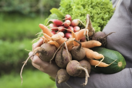 self sufficient: Woman holding vegetables in garden mid section side view close-up