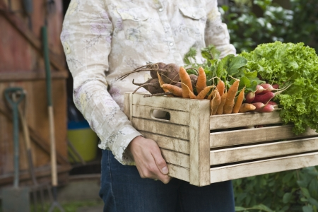 grow food: Man carrying crate of vegetables mid section