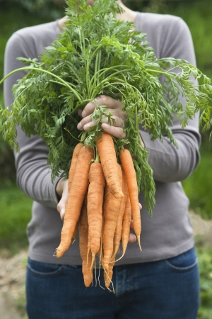 self sufficient: Woman holding bunch of carrots mid section