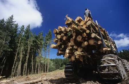 logging industry: 14890045,Outdoors,Day,Low Angle View,Blue Sky,Back View,Transportation,Nobody,colour,Rear View,Truck,Log,Industry,Trees,Lumber,timber,Industrial Equipment,Destruction,Environmental issues,Deforestation,timber industry,No People,Logging Industry  ,