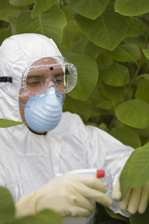 protective mask: Worker in protective mask and suit spraying plants