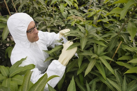 calipers: Worker in protective suit measuring plants elevated view