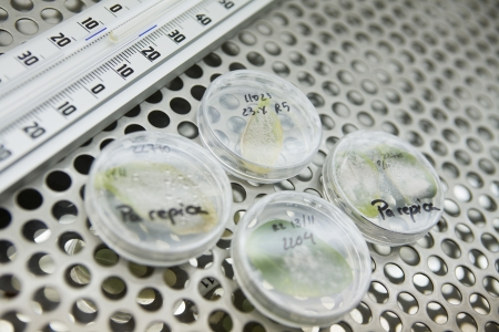 Leaves in petri dishes on lab shelf Stock Photo - 20715675
