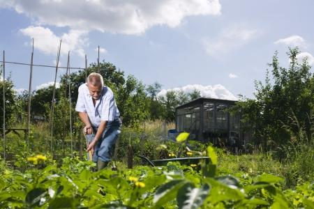 self sufficient: Senior man gardening