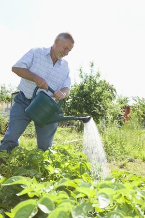 self sufficient: Senior man watering plants in garden