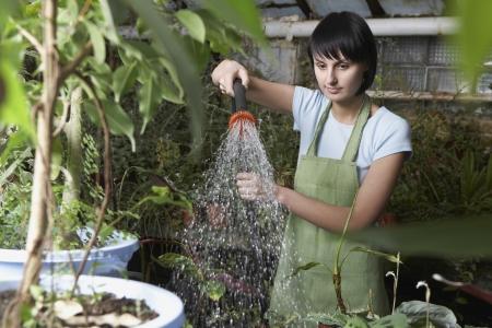 conservatories: Greenhouse Worker Watering Plants LANG_EVOIMAGES