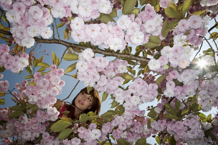 20 to 25 year olds: Woman in a Blossoming Cherry Tree