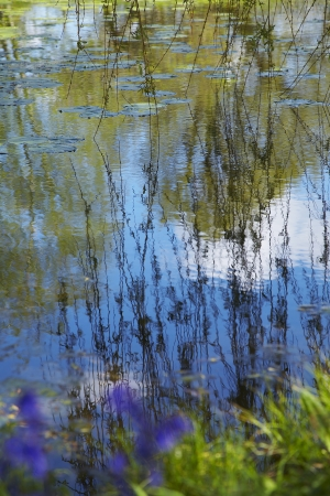 lilypad: Willow Branches Over Lily Pad Covered Pond