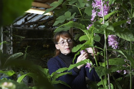 conservatories: Woman Examining Flowers