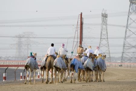 racetrack: Dubai UAE Camels and jockeys training at Nad Al Sheba Camel Racetrack at sunset