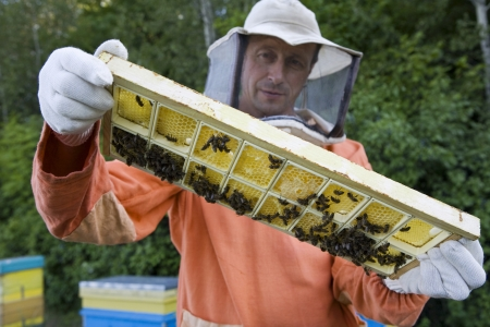 Beekeeper Holding Honeycomb with Honey Bees Stock Photo - 20716894