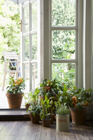 group of plants: Potted plants in house LANG_EVOIMAGES