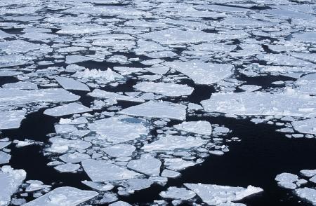 weddell: Antarctica Weddell Sea ice floe