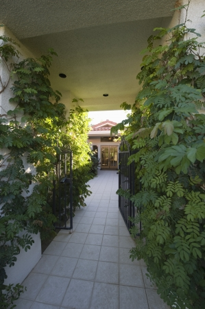 showhome: Plants grow at entrance to Palm Springs home LANG_EVOIMAGES