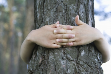 hands holding tree: Child with arms around tree trunk LANG_EVOIMAGES
