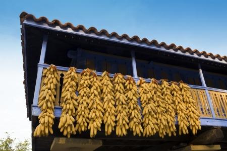 Corn cobs dry on balcony in Asturias Spain Stock Photo - 20741175