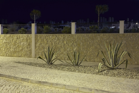 resistant: Drought resistant plants in gravel bed Portugal LANG_EVOIMAGES