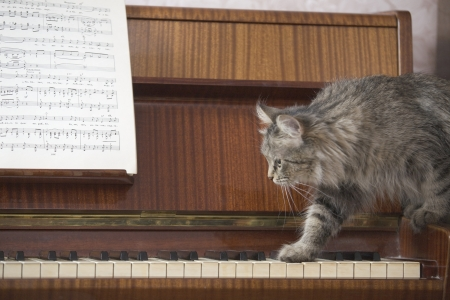 piano keyboard: A piano with a sheet of music and a cat stepping onto the piano keys