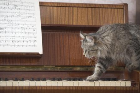 teclado de piano: Un piano con una hoja de la música y un gato caminar sobre las teclas del piano