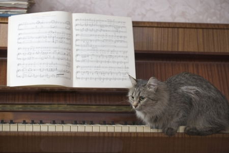 out of context: A piano with a book of music and a cat sitting on the piano keys