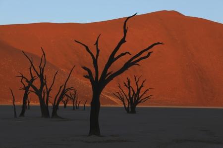 vlei: Dead Vlei  Namib Desert  Namibia