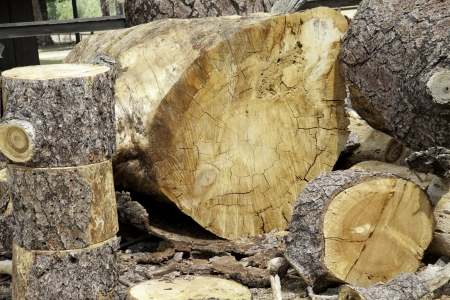Chopped wooden logs Stock Photo - 20742534