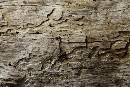 Close-up shot of wood grain pattern Stock Photo - 20742539