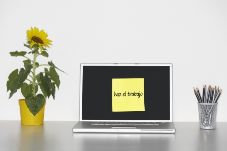 Sunflower plant on desk and sticky notepaper with Spanish text on laptop screen saying