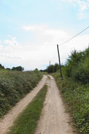 unpaved road: Unpaved road amidst plants LANG_EVOIMAGES