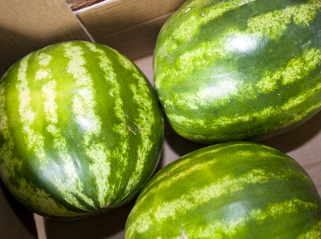 commercialism: High angle view of watermelons in grocery store