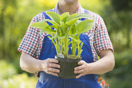 midsection: Midsection of gardener holding potted plant at nursery