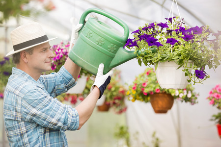 plant pot: Side view of middle-aged man watering flower plants in greenhouse LANG_EVOIMAGES