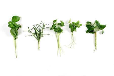 differentiation: Studio shot of fresh herbs