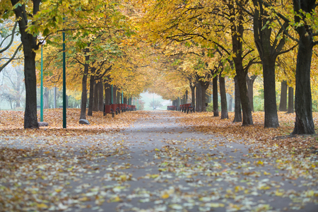 View of walkway and autumn trees in park Stock Photo