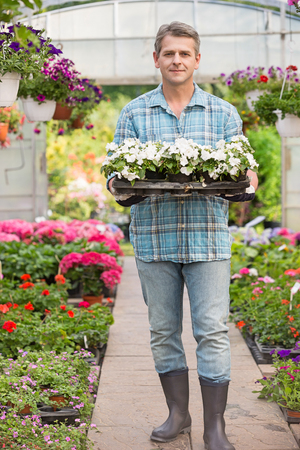 focus on foreground: Full-length portrait of gardener carrying crate with flower pots in greenhouse